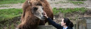 Keeper the camel