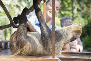 Lenny the sloth