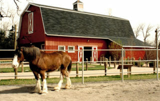 Horse outside of Red Barn