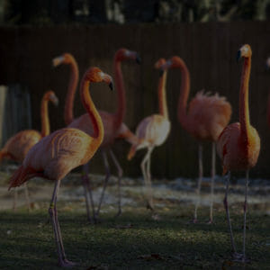 flamingos blur overlay