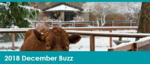 December Buzz Header