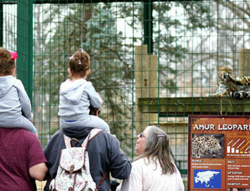 Zoo Opens for 2019