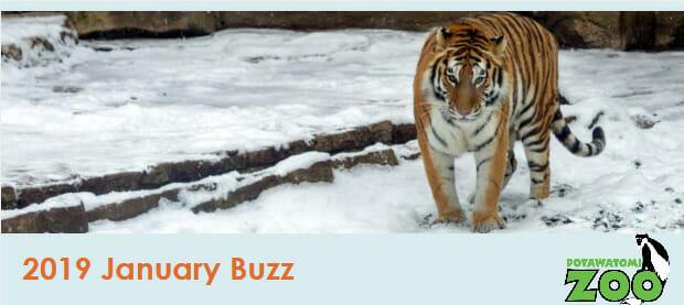 January buzz header
