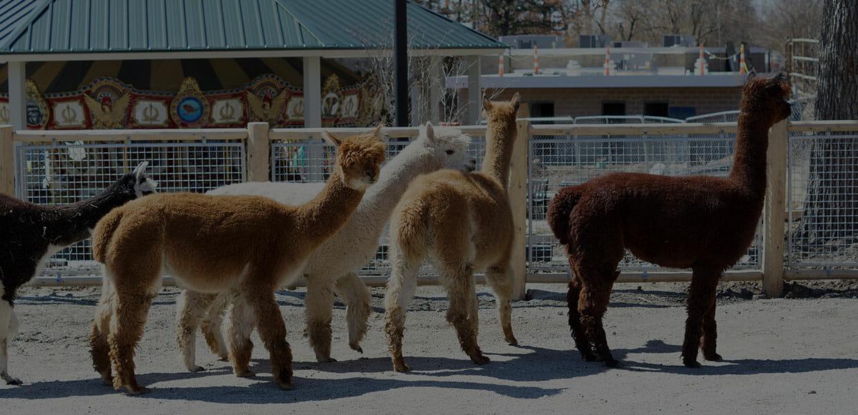 zoo-updates-header
