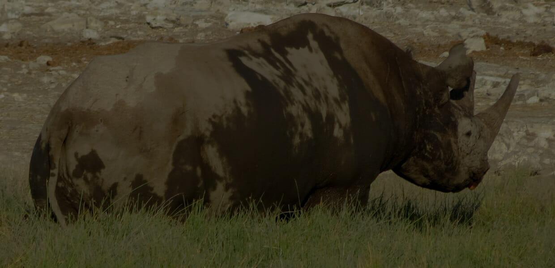 a muddy rhinoceros photo by josh sisk