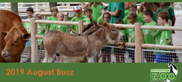 e-newsletter header august 2019 mini donkeys