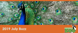july 2019 e-newsletter header peacock