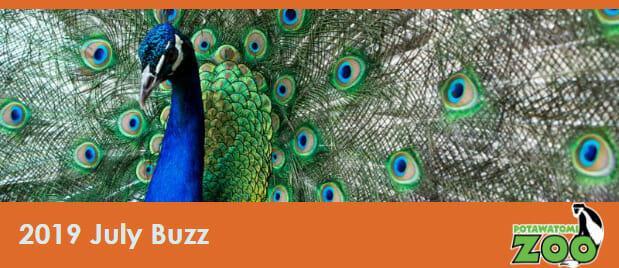 july 2019 e-newsletter header peacock