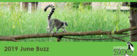 june 2019 e-newsletter header lemur on a log