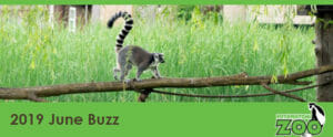 june 2019 e-newsletter header lemur on a log