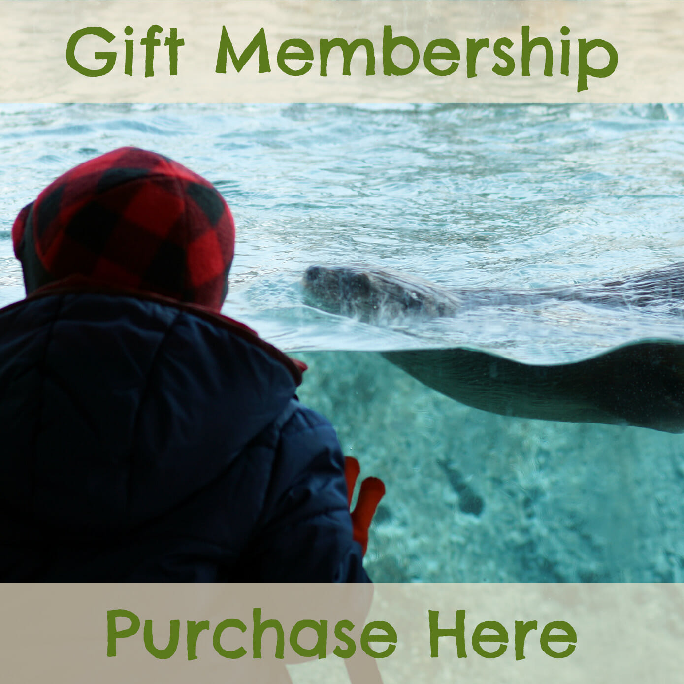purchase a membership for yourself or someone else