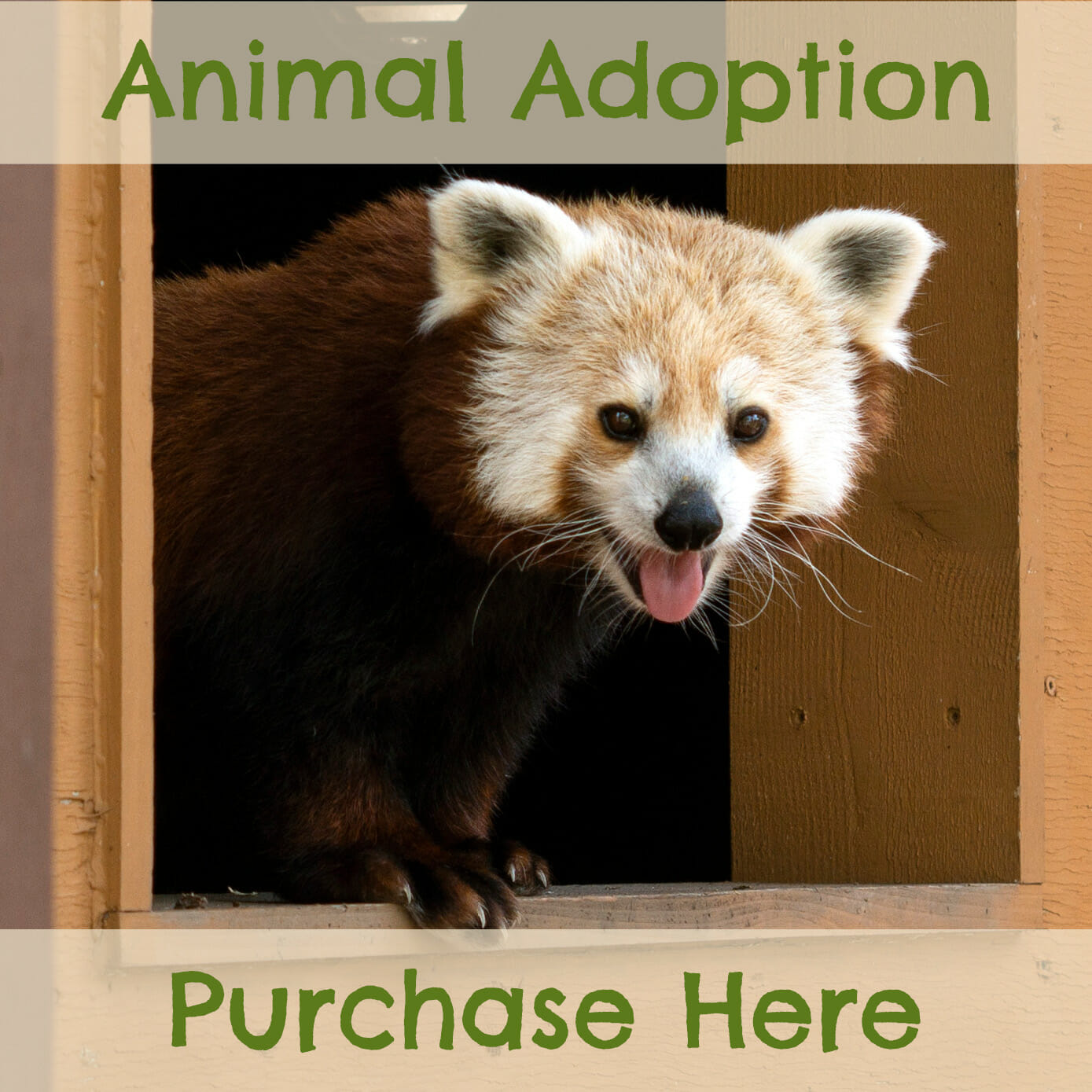 Adopt a Zoo animal here