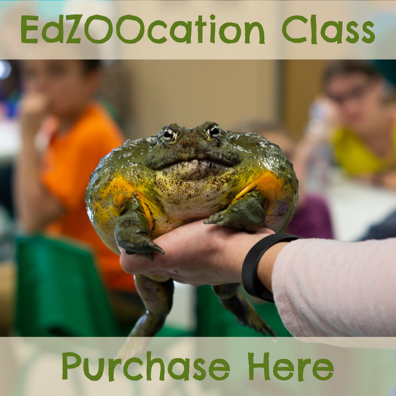 purchase an educational zoo class
