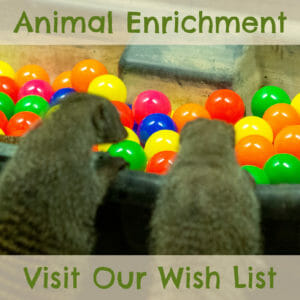 help us provide enrichment for our animals