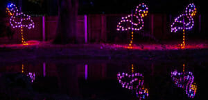 three pink flamingo lights reflected in the pond
