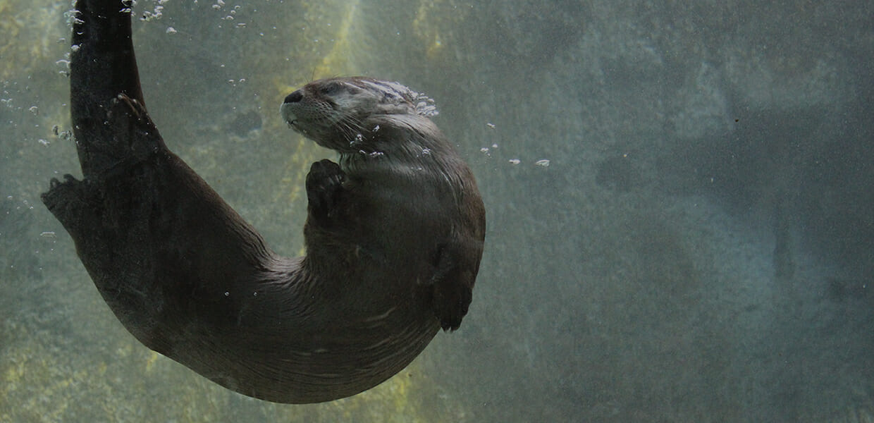 river-otter-header