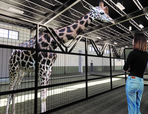 Bringing giraffes to the Zoo
