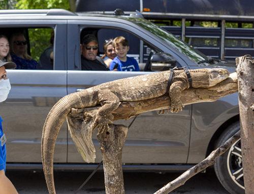 Drive Through Zoo